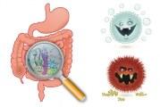 Microbiota intestinal tras la ingesta de distintos tipos de pan