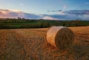 La apuesta del sector alimentario español por la industria 4.0