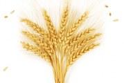 Participa en la campaña solidaria «Vayamos al grano» con la AETC
