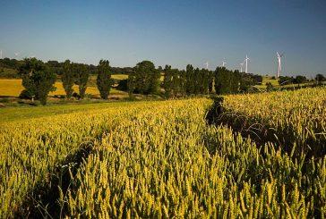 Éxito de convocatoria en la segunda jornada online de Innovatrigo sobre trigo bajo en emisiones en Navarra